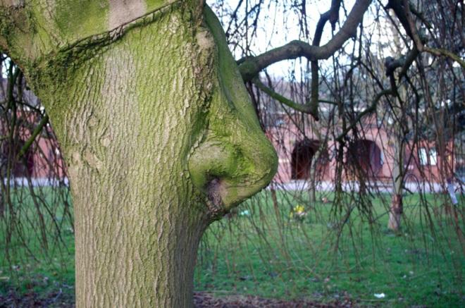 potd-tree-nose_3219300k