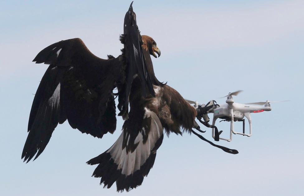 A golden eagle grabs a flying drone during a military training exercise at Mont-de-Marsan French Air Force base