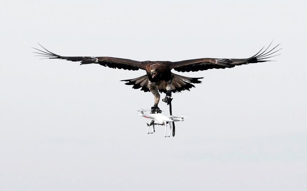 A golden eagle carries a flying drone away during a military training exercise at Mont-de-Marsan French Air Force base