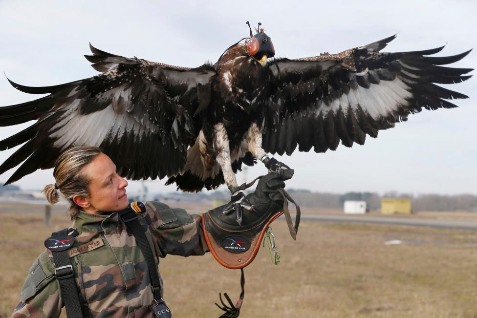 A French army falconer works with a golden eagle as part of a military training for combat against drones in Mont-de-Marsan French Air Force base, Southwestern France